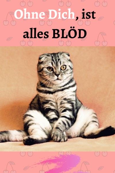 Katze Nach Kastration Alleine Lassen